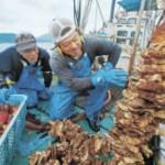 WTO提訴、宮城県のホヤ、韓国へ輸出断念